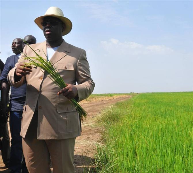 Macky Sall: « Le département de Bounkiling sera bientôt autosuffisant en riz et pourra même vendre aux autres départements