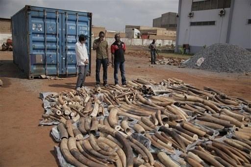 Le réseau de trafic d'ivoire de Soumbédioune tombe