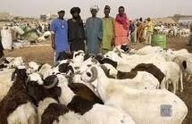 Foirail de Mbao : Les éleveurs se fâchent