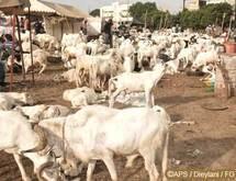 102.000 moutons recensés dans les foirails de Louga