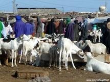 Les éleveurs  crient pour la suppression des taxes