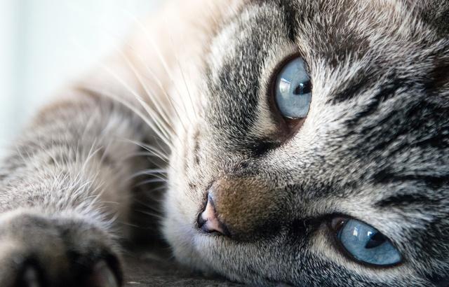 Job de rêve: une Américaine recrute pour «câliner» 55 chats pendant six mois sur une île paradisiaque