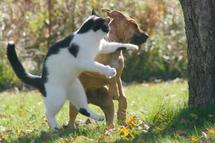 Kolda : un chien mord un mouton, leurs propriétaires déférés au parquet