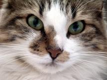 Incroyable! Un chat hérite de 10 millions d'euros