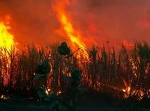 Fouladou: Quelques 200 hectares de riz emportés par les flammes