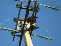 Drame dans un chantier à hauteur de Keur-Massar : Un ouvrier meurt électrocuté