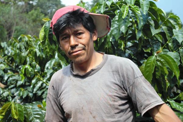 Pourquoi la forêt amazonienne brûle aussi en Bolivie
