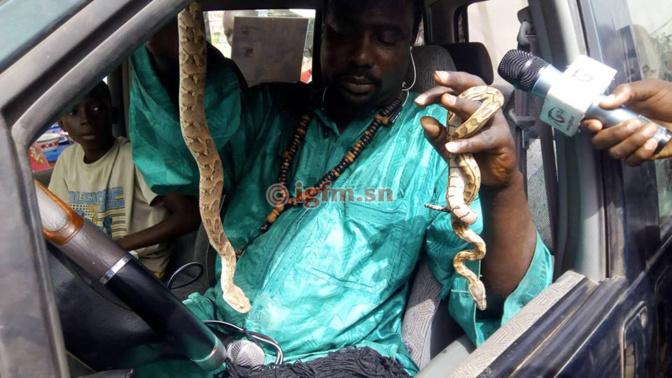 Charmeurs de serpents : ils côtoient la mort tous les jours
