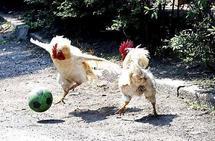 Un Coq Sportif en plein action, contre de balle digne des vrai pros du football