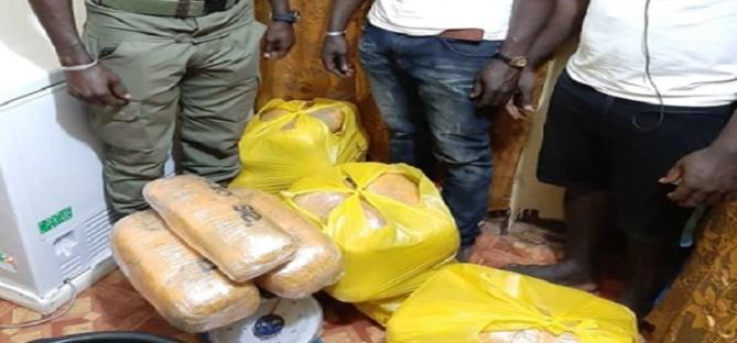Bignona: Saisie de 35 kg de chanvre indien, deux trafiquants arrêtés