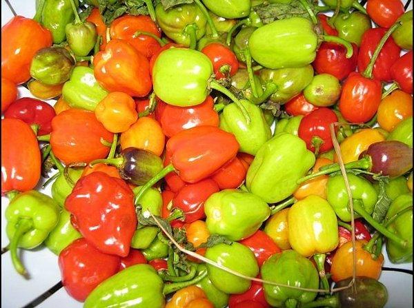 Le piment : Un remède contre le cholestérol