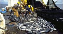 Les licences de pêche prolongées de trois mois depuis le 6 mai