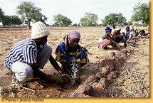 La Banque mondiale donne une nouvelle impulsion à la lutte contre la sécheresse dans la Corne de l'Afrique et  au Sahel