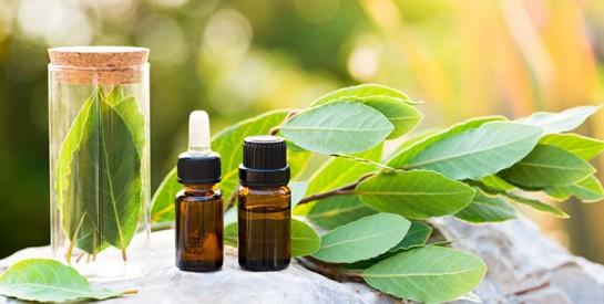 L'huile essentielle de laurier pour purifier votre peau