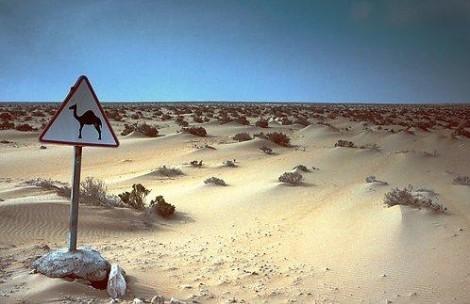 Sahara/ONU : la sangsue et le parasite prédateur à découvert
