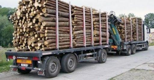 Coupe de bois de la Casamance : 117 milliards de FCFA volés au Sénégal par la Gambie