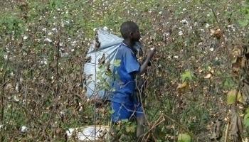Travail des enfants: le BIT et le gouvernement travaillent sur un plan de lutte