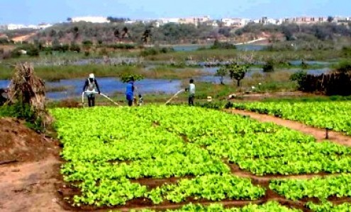 Atelier de Restitution sur le changement climatique et agriculture urbaine: Des espaces verts de Dakar menacés