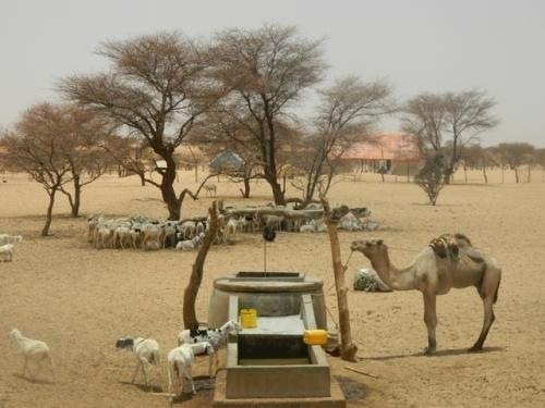 Mauritanie: Le bétail en quête de pâturages au Mali