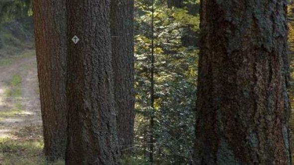 Une caméra cachée surprend les ébats sexuels d'un politicien en forêt