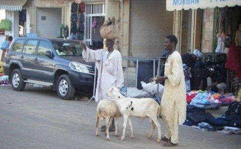 Chronique de DIA SECK - Dakar : capitale des ruralités urbaines