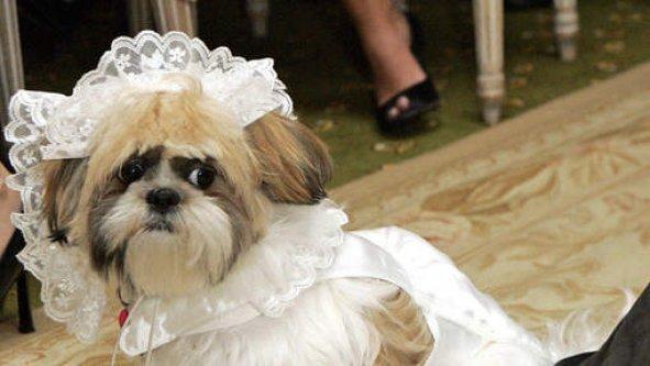 LE MARIAGE ANIMALIER LE PLUS CHER DU MONDE