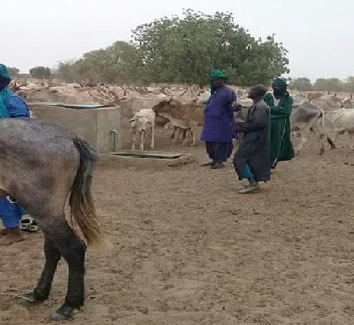 Ranch de Dolly: Plus de 1300 ménages d'agriculteurs et de pasteurs en souffrance