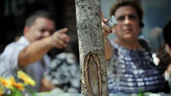 """Une foule vénère un arbre où certains ont """"vu la vierge"""""""