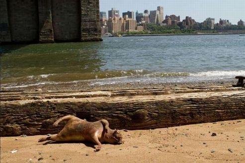 Le mystérieux monstre de Manhattan