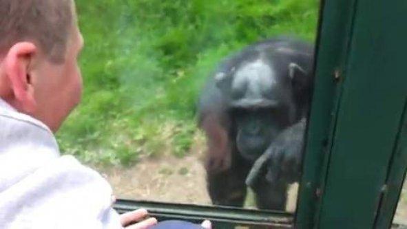 Un singe demande qu'on l'aide à s'évader d'un zoo