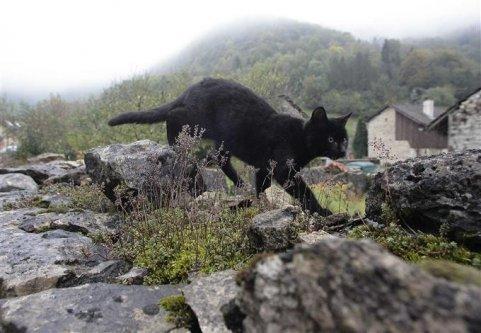 Un chat passeur de drogue!