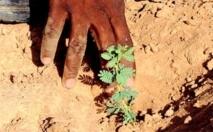 Grande muraille verte : des jeunes de Bignona veulent reboiser 2.000 hectares