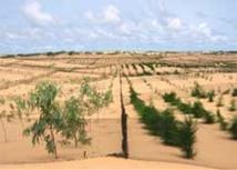 Besoins de 1200 plantes pour reboiser 12 établissements sociocommunautaires à Lambaye