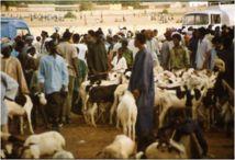 Il n'y aura pas de pénurie de moutons, rassure le gouvernement