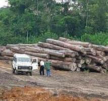 Exploitation transfrontalière et anarchique de bois a Bounkiling : Un Gambien et cinq Sénégalais arrêtés, des chinois dans le réseau