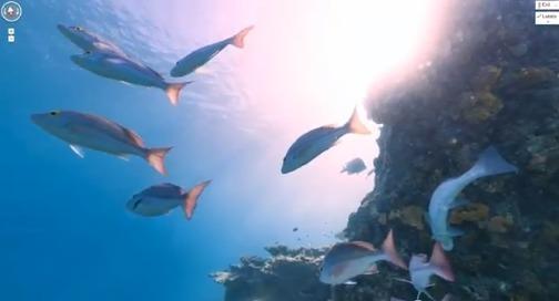 Google Maps diffuse ses premières images sous-marines