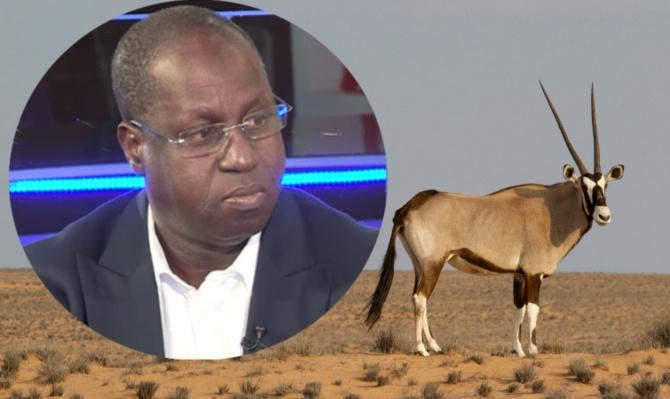 Affaire des gazelles transférées: Abdou Karim Sall à ses oryx et périls