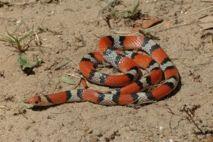 Un serpent provoque la panique dans une école de Dakar