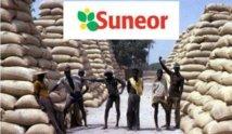 Ziguinchor : Les travailleurs de la Suneor menacent de bloquer les camions et de verrouiller les routes
