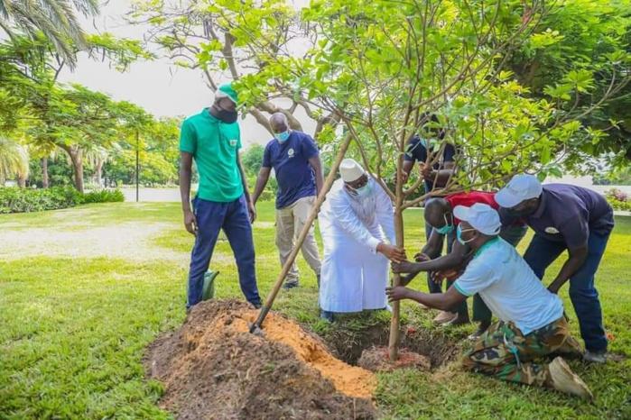 Reboisement: Le Président Macky Sall a planté son 5e arbre au Palais (Photos)