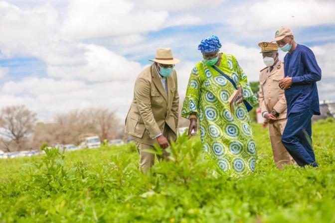 Tournée économique de Macky Sall: En images, l'étape de Sibassor