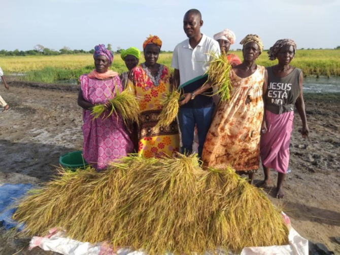 Fatick : Mamadou Ngom Niang donne suite à l'appel du Président Macky Sall, pour un retour vers l'agriculture