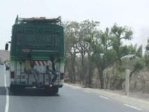 Carrapide : Insolites et bêtisiers 2012