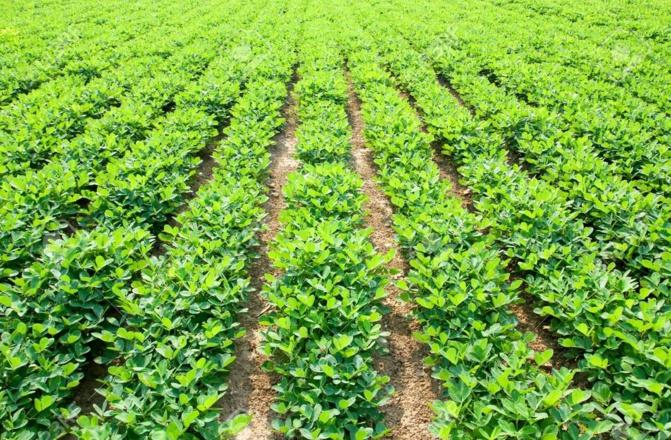 Campagne de commercialisation de la production agricole: Macky Sall presse les ministres de l'Agriculture et du Commerce pour son démarrage