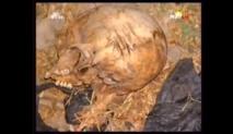 [Vidéo] Des ossements humains encore découverts à Rufisque
