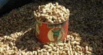 Kaolack : les producteurs d'arachide demandent la suppression de la subvention des semences
