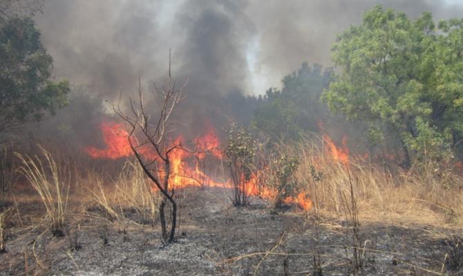 Environnement: 17 feux de brousse, plus de 5000 ha du tapis herbacé ravagés