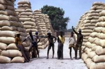 Le CNCR s'insurge contre « la désorganisation » du marché de l'arachide