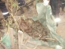 DÉCOUVERTE MACABRE À TAMBACOUNDA : Des squelettes retrouvés dans le lit du Mamacounda