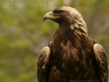 [Audio]Incroyable! elle à une garde du corps un oiseaux qui le suit partout
